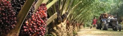 Waarom Oikocredit Palmolieboeren Helpt